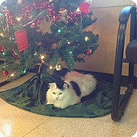 Adopt A Pet :: Sweet Sammy a lover - Sterling Hgts, MI