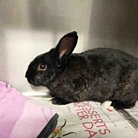 Adopt A Pet :: JAZZY - Los Angeles, CA