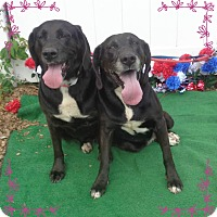 Adopt A Pet :: BOOTS & LULA - Marietta, GA