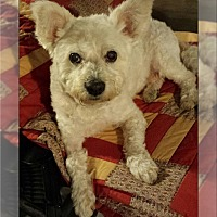 Adopt A Pet :: Fomo - MI - Tulsa, OK