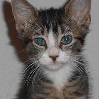Adopt A Pet :: Chatham - North Highlands, CA