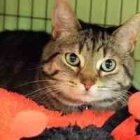 Adopt A Pet :: Cookie - Negaunee, MI