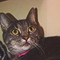 Adopt A Pet :: Candy - El Paso, TX