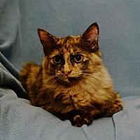 Adopt A Pet :: Kalinda - Sanford, FL
