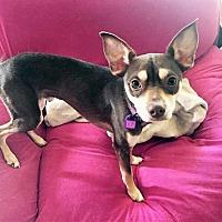 Adopt A Pet :: Chewy - Buffalo, NY