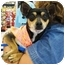Photo 1 - Miniature Pinscher Mix Dog for adoption in Sugar Land, Texas - Ricky