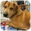 Photo 2 - Labrador Retriever/Shepherd (Unknown Type) Mix Dog for adoption in Plainfield, Illinois - Encore