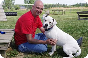 American Bulldog Puppy for adoption in Elyria, Ohio - Misty