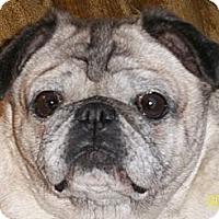 Adopt A Pet :: Turbo - Hinckley, MN