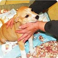 Adopt A Pet :: Peter Pan - Wayne, NJ