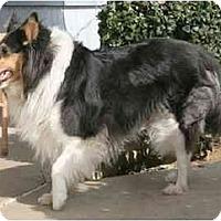 Adopt A Pet :: Trilby - Gardena, CA