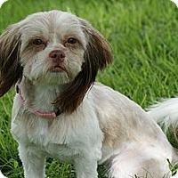 Adopt A Pet :: EMMY LOU - CAPE CORAL, FL