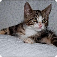 Adopt A Pet :: Boots - New Egypt, NJ