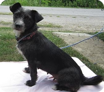 Terrier (Unknown Type, Small) Mix Dog for adoption in Harrodsburg, Kentucky - Minnie