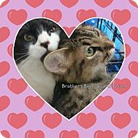 Adopt A Pet :: Rowan - Harrisburg, NC