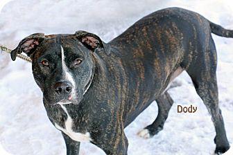 American Pit Bull Terrier Mix Dog for adoption in Idaho Falls, Idaho - Dody