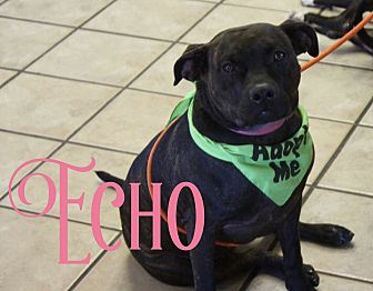 Boxer/Pit Bull Terrier Mix Dog for adoption in Cheney, Kansas - Echo