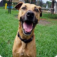 Adopt A Pet :: RYLIE - Jacksonville, FL