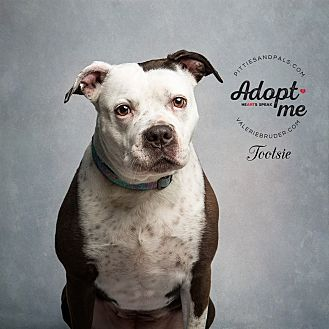Pit Bull Terrier Mix Dog for adoption in Jackson, New Jersey - Tootsie