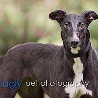 Adopt A Pet :: Shawnee - Dallas, TX
