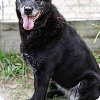 Adopt A Pet :: Leia - Virginia Beach, VA