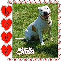 Pit Bull Terrier Dog for adoption in Belleville, Michigan - Stella