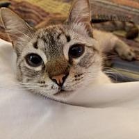 Adopt A Pet :: Choco - Greeley, CO