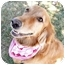 Photo 3 - Golden Retriever Mix Dog for adoption in Sacramento, California - Heidi super