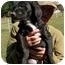 Photo 2 - Labrador Retriever Mix Puppy for adoption in Thomaston, Georgia - Carl