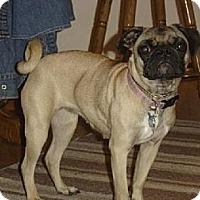 Adopt A Pet :: Buffy - Walled Lake, MI