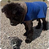 Adopt A Pet :: Sampson - Holland, MI