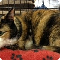 Adopt A Pet :: Maggie - Hyde Park, NY