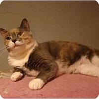 Adopt A Pet :: Carrie - Muncie, IN