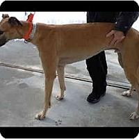 Adopt A Pet :: Jason - N. BABYLON, NY