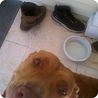 Adopt A Pet :: Bella - Orlando, FL