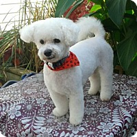 Adopt A Pet :: Theo - Mississauga, ON