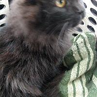Adopt A Pet :: Nicholas - Covington, PA