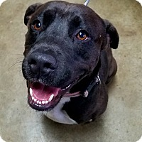 Adopt A Pet :: Goselyn - Troutville, VA