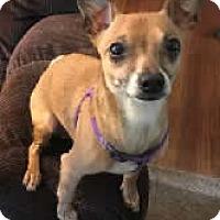 Adopt A Pet :: Sprite - Avon, NY