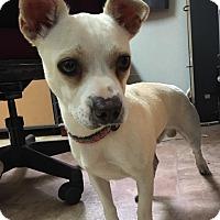 Adopt A Pet :: Vinnie - Savannah, GA