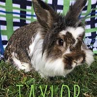 Adopt A Pet :: Taylor - Elizabethtown, KY
