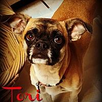 Adopt A Pet :: TORI - Phoenix, AZ