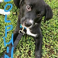 Adopt A Pet :: Dolphin - Alpharetta, GA