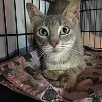 Adopt A Pet :: Auntie Em (Oz adult female) - Spring Grove, PA