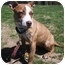 Photo 2 - American Pit Bull Terrier Dog for adoption in Edgewater, New Jersey - Destiny
