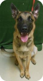 German Shepherd Dog Mix Dog for adoption in Gary, Indiana - Whisper