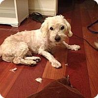 Adopt A Pet :: Barney - Santa Monica, CA