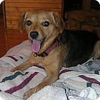 Adopt A Pet :: Skittles - Stilwell, OK