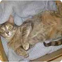 Adopt A Pet :: Cindy - Markham, ON