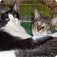Adopt A Pet :: Loki - Orlando, FL